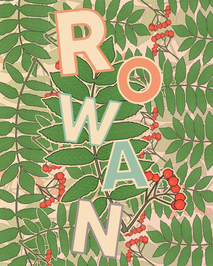 illustration of the name Rowan, on top of rowantree leaves